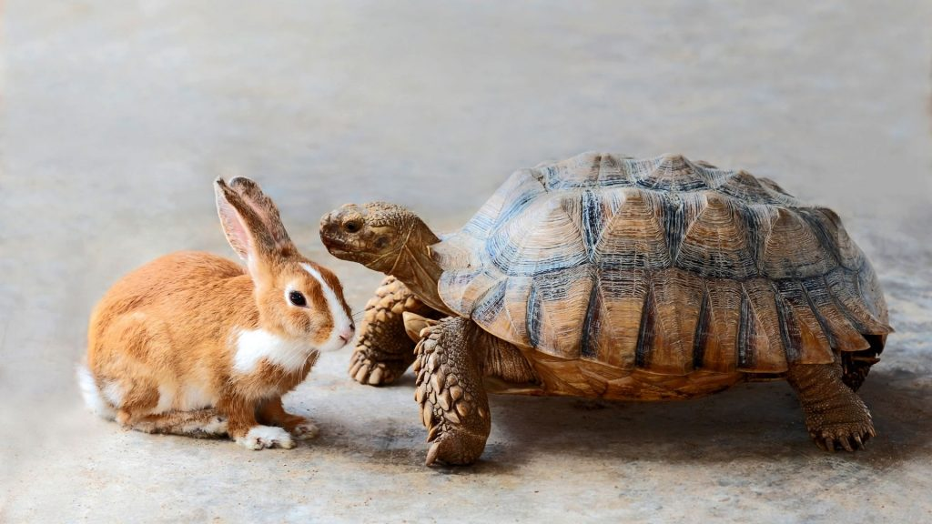 Online tribe turtle and rabbit